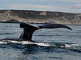 Puerto Madryn cruises