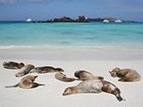 Isla Espanola cruises