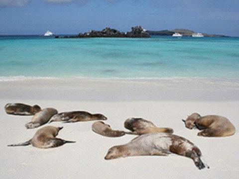 Isla Española cruises